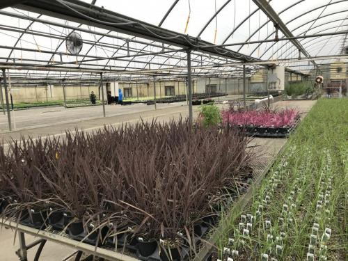 Berns Nursery Tour - Keep Middletown Beautiful 2020 Middletown Ohio